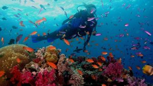 travel-to-goa-and-diving-2